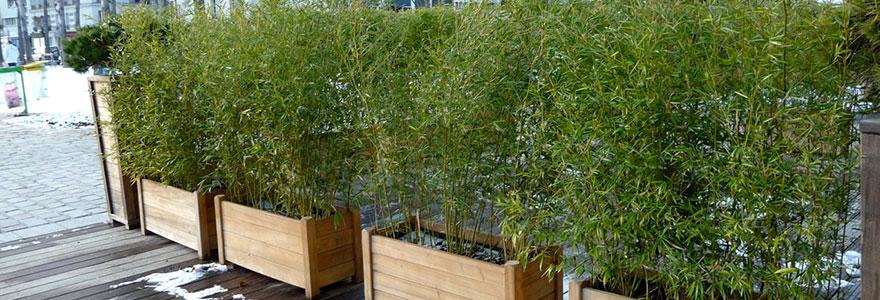bambou en pot